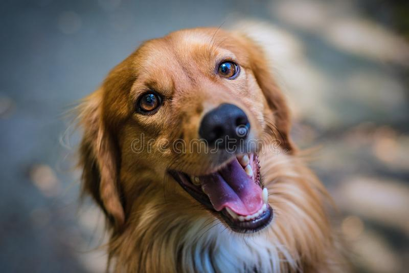 Hochsichtdarstellung eines jungen süßen Mongrel-Hundes lizenzfreies stockbild