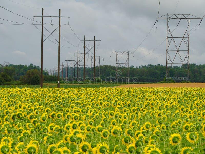 Hochspannungsleitungen auf dem Gebiet von Sonnenblumen lizenzfreie stockbilder