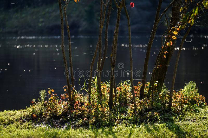 Download Hochwasserniveau Im Fluss Gauja, Nahe Valmiera-Stadt In Lettland S Stockbild - Bild von teutonic, gras: 106801049