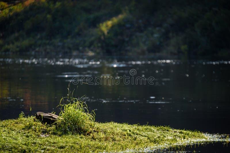 Download Hochwasserniveau Im Fluss Gauja, Nahe Valmiera-Stadt In Lettland S Stockfoto - Bild von grotte, busch: 106801300
