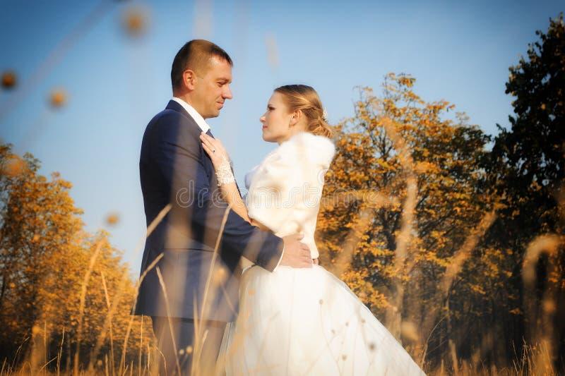 hochzeit Braut und Bräutigam lizenzfreie stockfotos