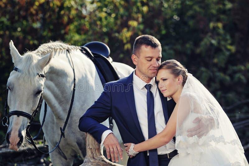 hochzeit Braut und Bräutigam mit Schimmel stockfoto