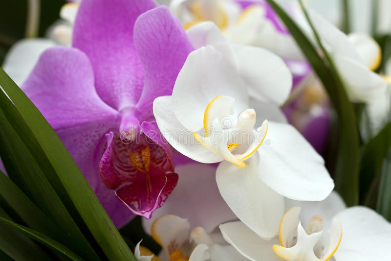 Hochzeitsblumen lizenzfreie stockbilder