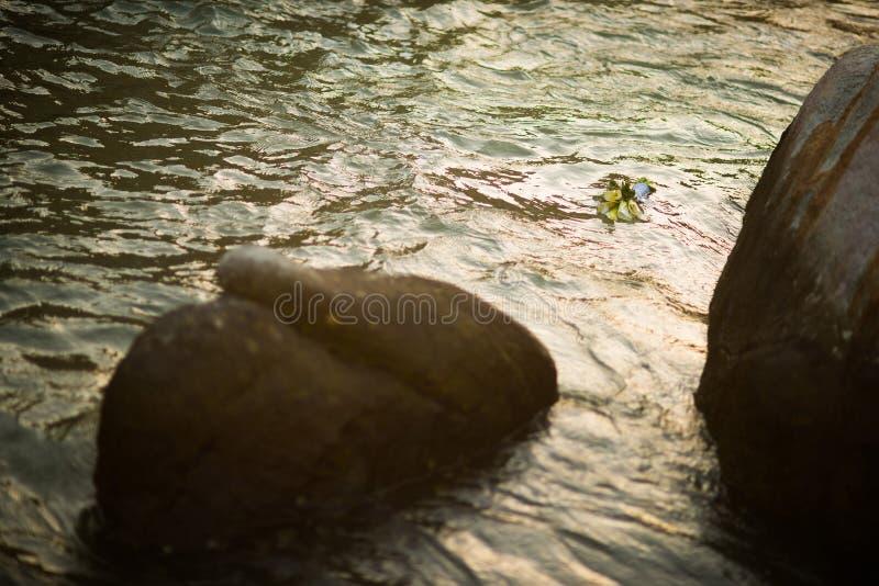 Hochzeitsblumenstrauß, der auf das Wasser bei Sonnenuntergang schwimmt stockfotografie