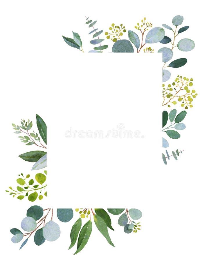 Hochzeitsgrün Eucalkyptus-Schablone vektor abbildung