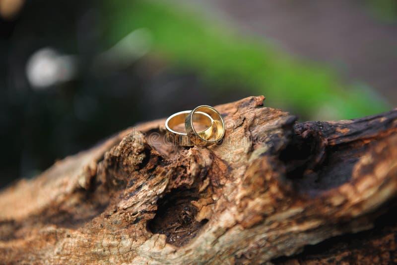 Hochzeitsringe als Symbol des glücklichen Lebens auf einem Baumstumpf stockfotografie