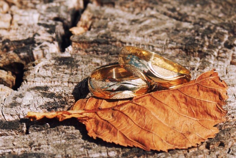 Hochzeitsringe aranged in der Natur lizenzfreies stockbild