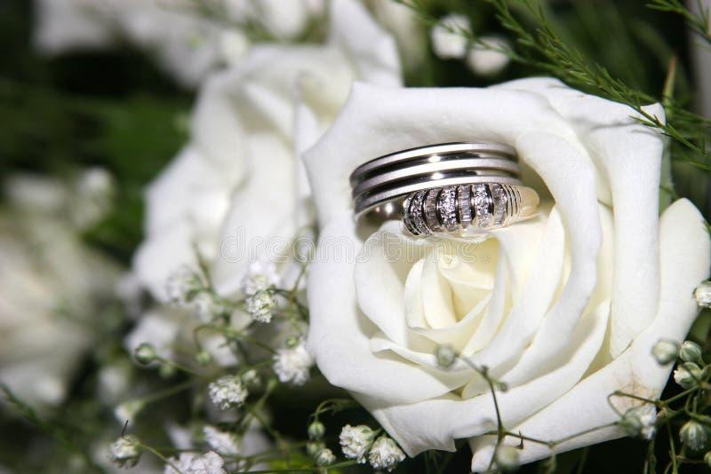 Hochzeitsringe in einer Rose stockfotografie