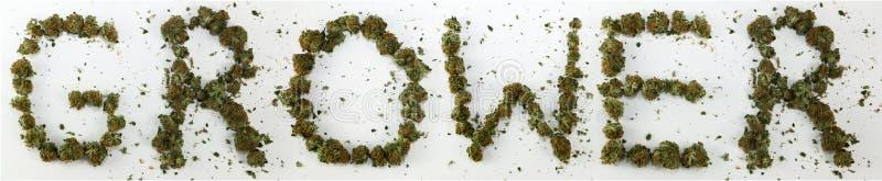 Hodowca Literujący Z marihuaną zdjęcie stock