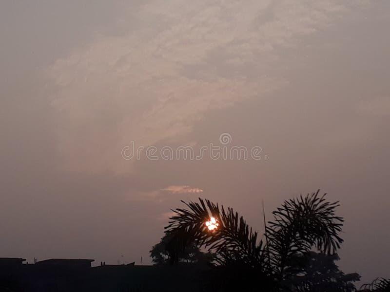 hoe de INDIA-bomen in de lucht zijn royalty-vrije stock foto's
