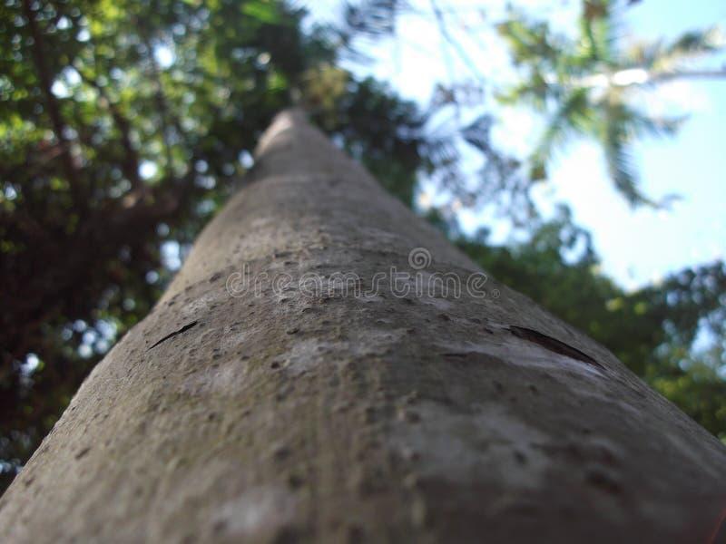 Hoe te een grote boom te zijn? stock afbeeldingen