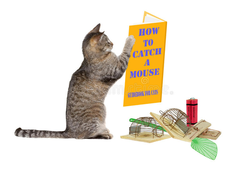 Hoe te om een muis te vangen stock afbeelding