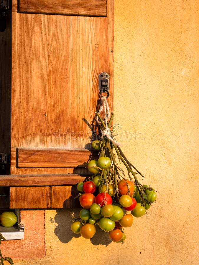 Hoe te om groen tomatenrood te draaien royalty-vrije stock foto