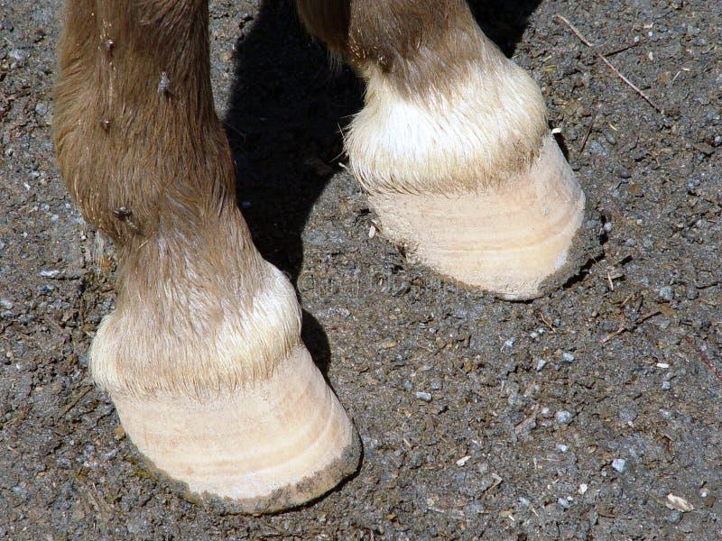 Download Hoef stock foto. Afbeelding bestaande uit grond, paard, rundvlees - 26360
