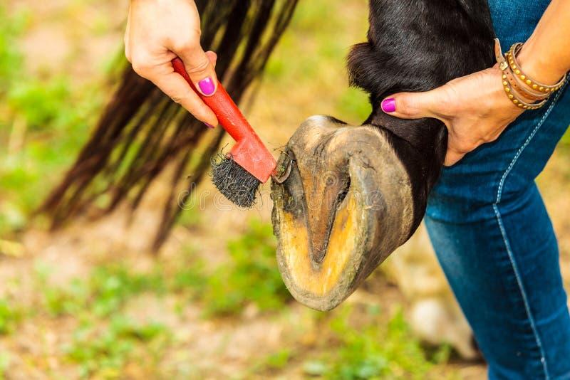 Hoef van het persoons de schoonmakende paard met hoeven stock afbeelding