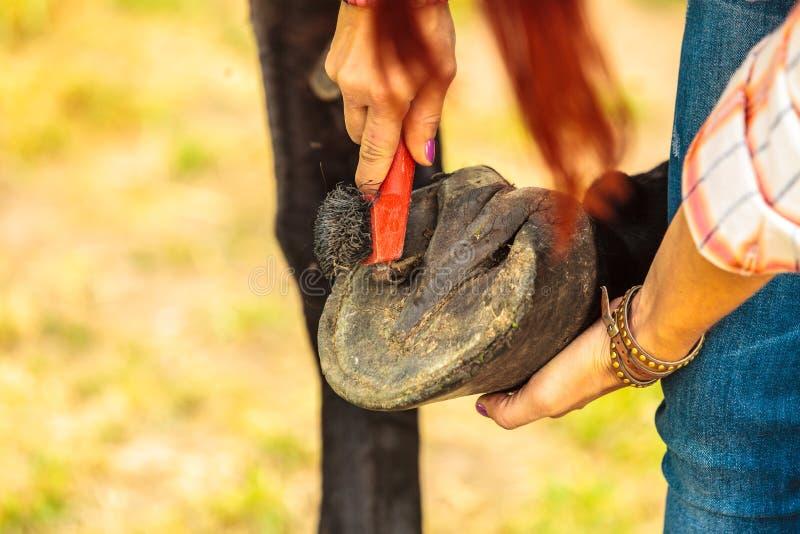 Hoef van het persoons de schoonmakende paard met hoeven royalty-vrije stock fotografie