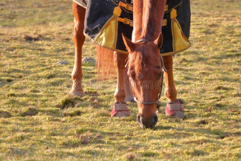 Hoefbescherming voor Paard stock afbeeldingen