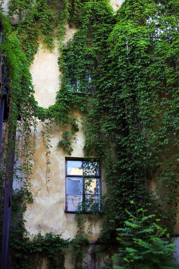 Hof mit Efeu auf der Wand stockbilder