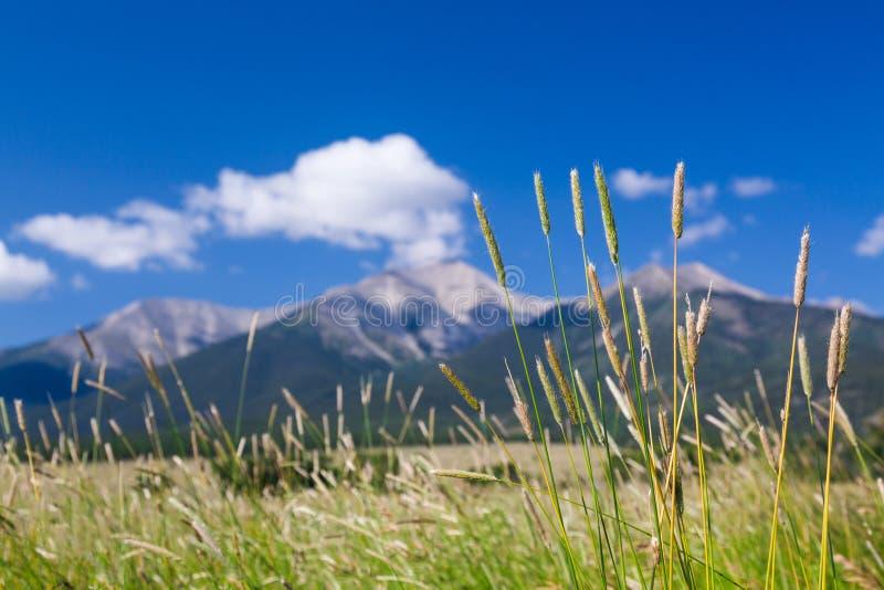 Hof und Gräser durch Mt Princeton Co lizenzfreie stockfotografie