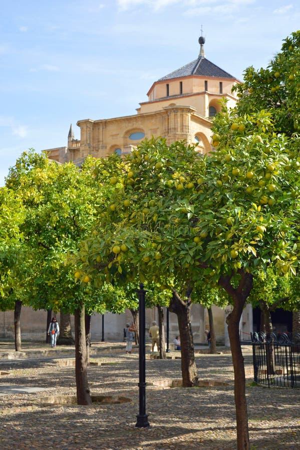 Hof van Sinaasappelen in beroemde Mezquita Cordoba, Andalucia, Spanje stock foto