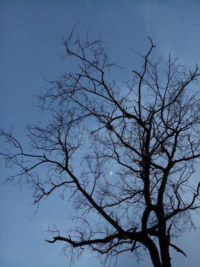 Hoffnung des toten Baums stockfotos