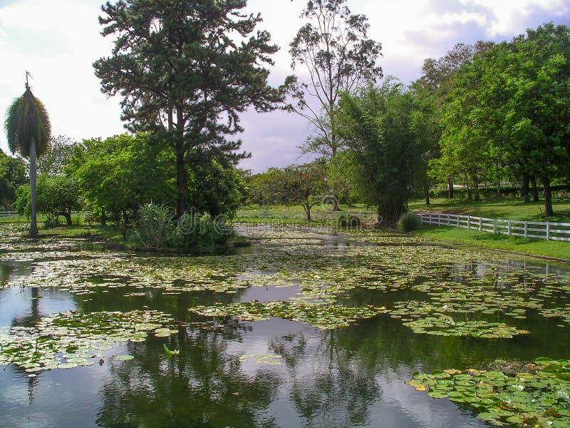 Hoffnungs-Gärten, Kingston, Jamaika lizenzfreie stockfotografie