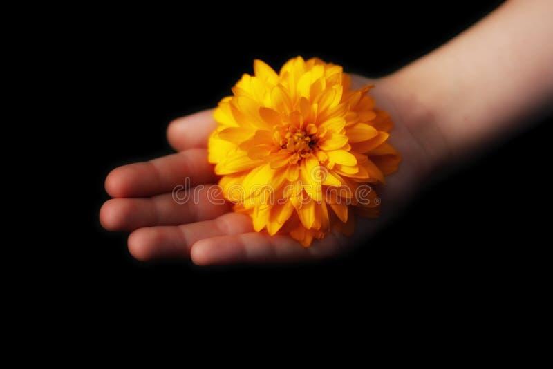 Hoffnungs-Konzept In der Hand eines Kindes glüht eine gelbe sonnige Blume stockfoto
