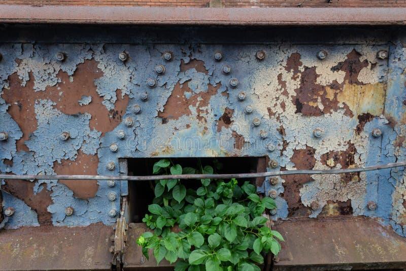 Hoffnungszusammenfassung, altes Metall korrodiert, Stadtverfall mit dem schönen Grünpflanzeauftauchen stockfoto