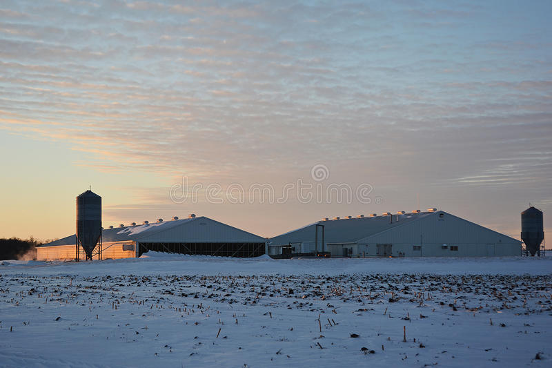Hog Barns stock photography