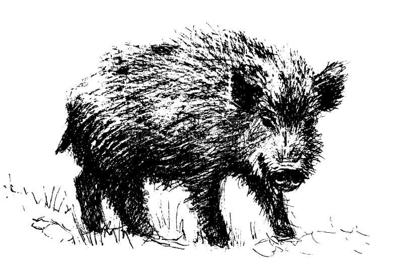 Hog stock photo