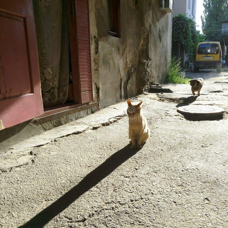 Hogar del animal del qog del gato de la mañana fotos de archivo