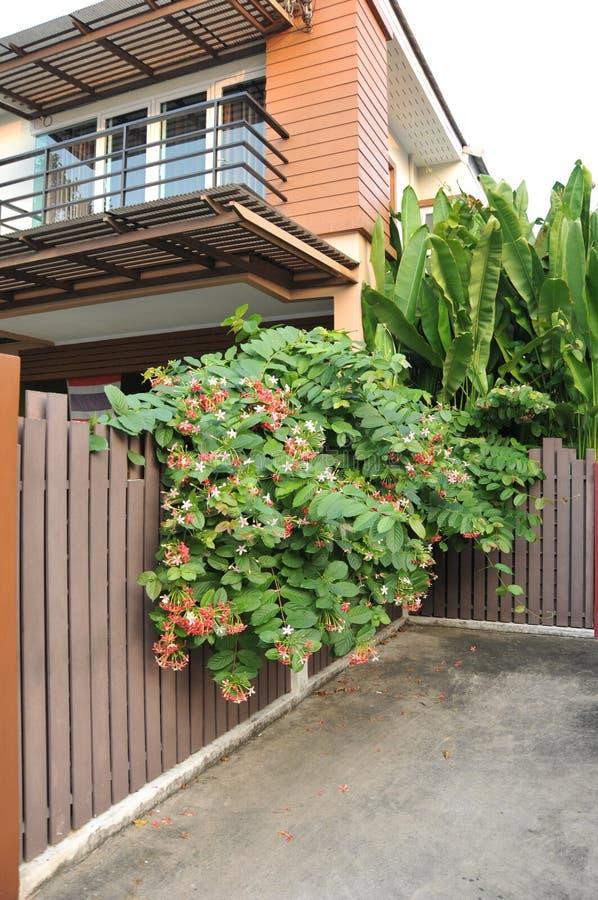 Hogar y flores y follaje que crecen alrededor de la casa, lila en la pared foto de archivo
