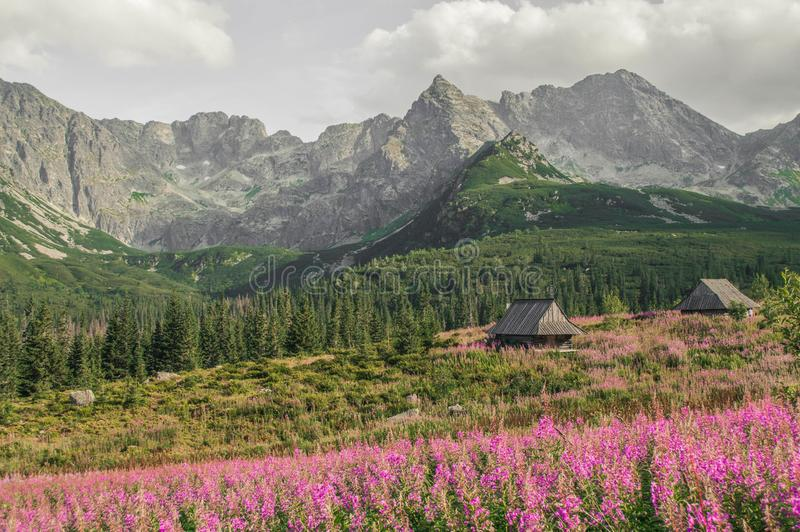 Hoge Bergen Tatra royalty-vrije stock afbeeldingen