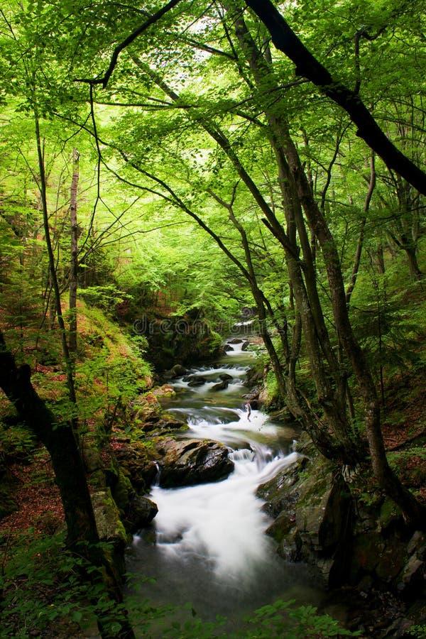 Hoge bergstroom in bos stock foto's