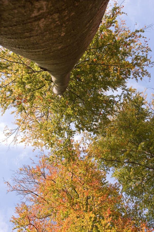Hoge de herfstboom stock afbeelding