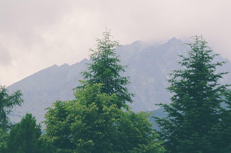 Hoge Misty Mountain royalty-vrije stock foto