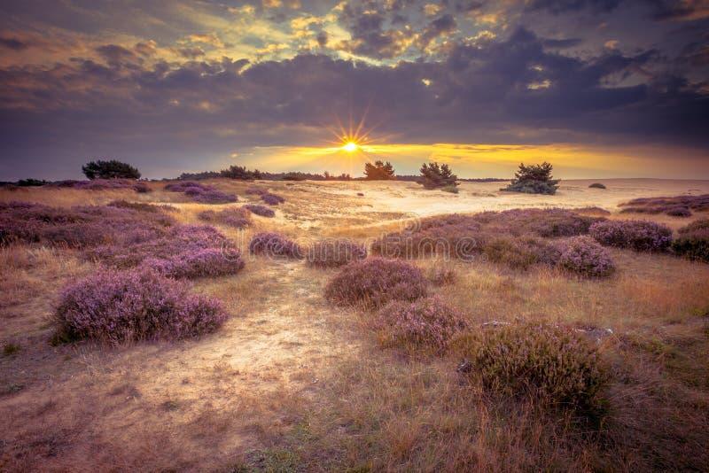 Hoge Veluwe在减速火箭的颜色的沙子欧石南丛生的荒野 库存照片