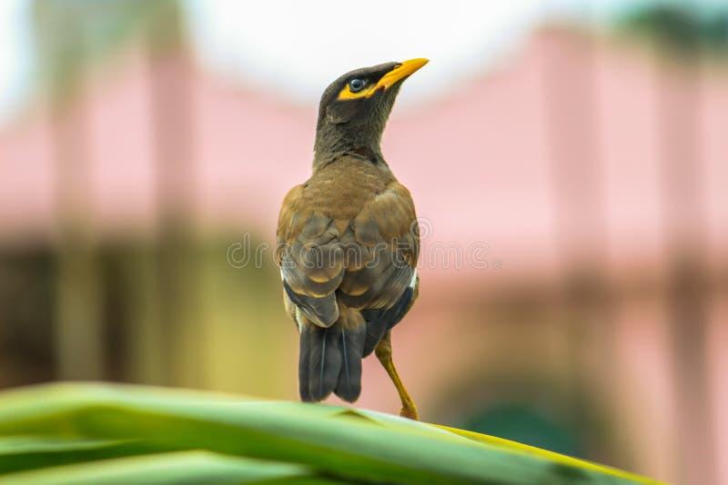 Hoge vogel hoge vlieg stock afbeeldingen