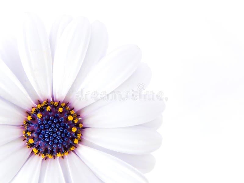 Hoge Zeer belangrijke foto van een bloem royalty-vrije stock fotografie