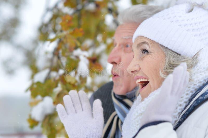 Hoger paar in de winterpark stock afbeelding
