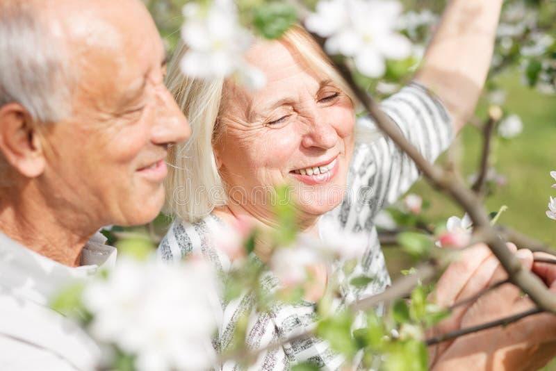 Hoger paar die van een ogenblik in hun tot bloei komende tuin genieten stock afbeeldingen