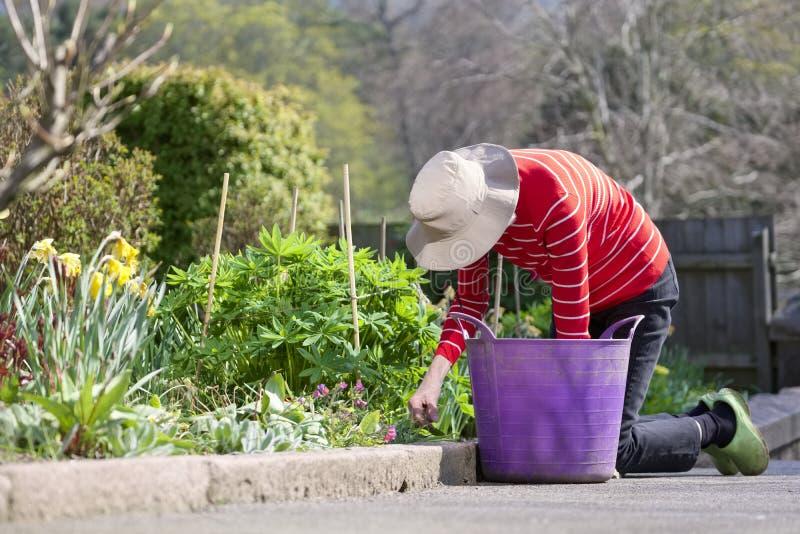 Hogere bejaarde persoons actieve levensstijl in tuin tijdens heldere kleurrijke de lentezonneschijn en de zomertemperatuur stock afbeelding