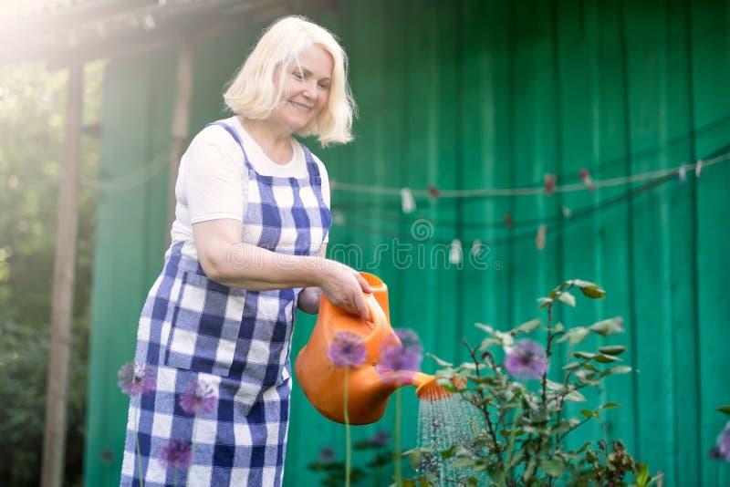 Hogere blondevrouw in schort het water geven bloemen in tuin stock foto