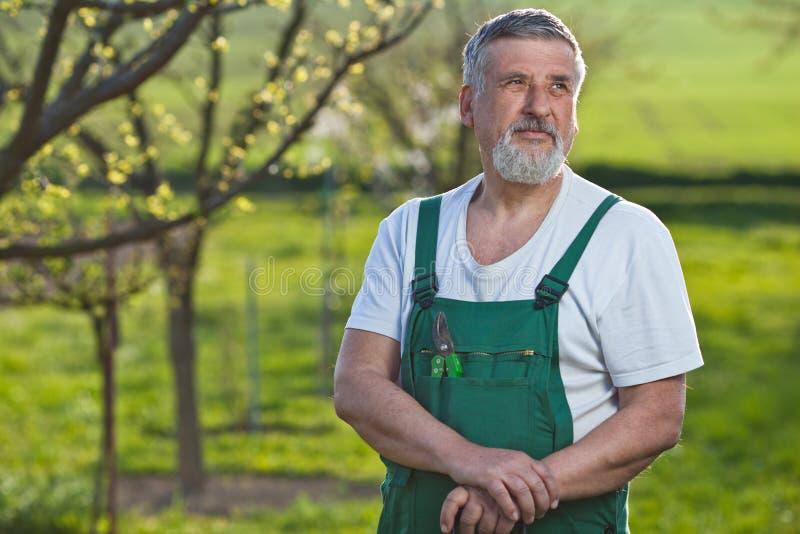 Hogere mens die in zijn tuin tuiniert royalty-vrije stock afbeeldingen