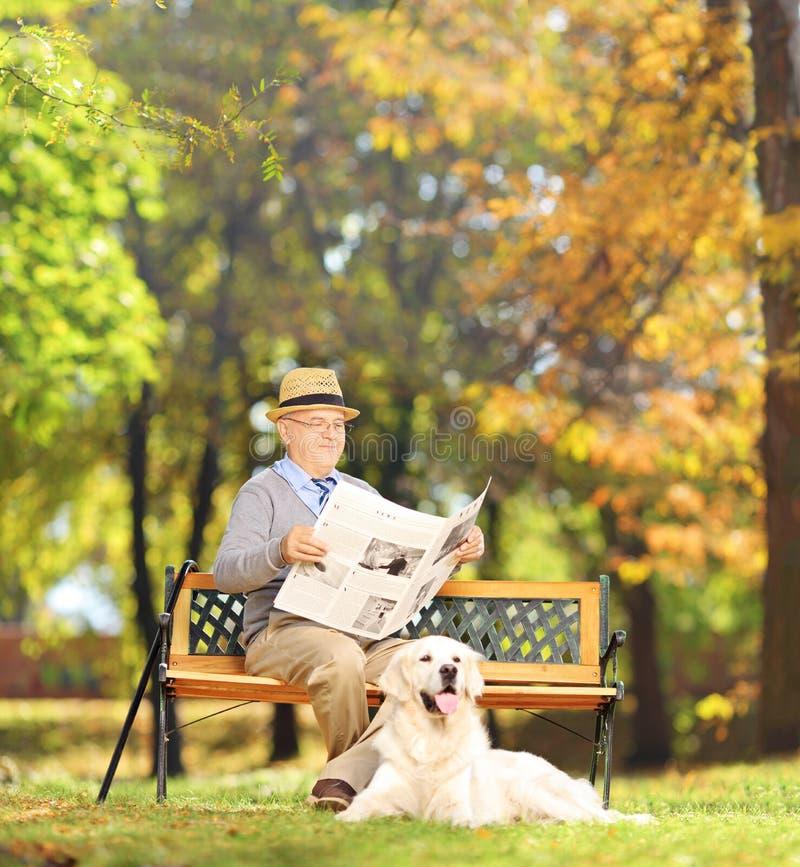 Hogere mens gezet op een bank die een krant met zijn hond, I lezen stock foto's