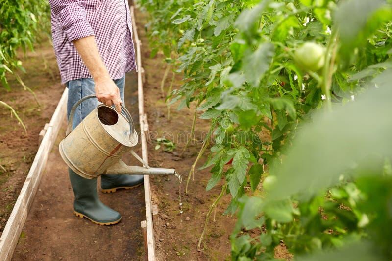 Hogere mens met gieter bij landbouwbedrijfserre royalty-vrije stock afbeelding