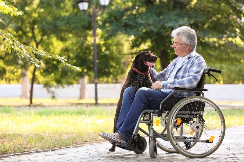 Hogere mens in rolstoel en zijn hond in openlucht stock fotografie