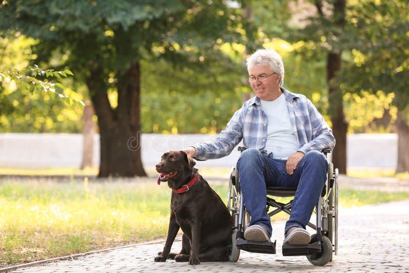 Hogere mens in rolstoel en zijn hond in openlucht stock foto's