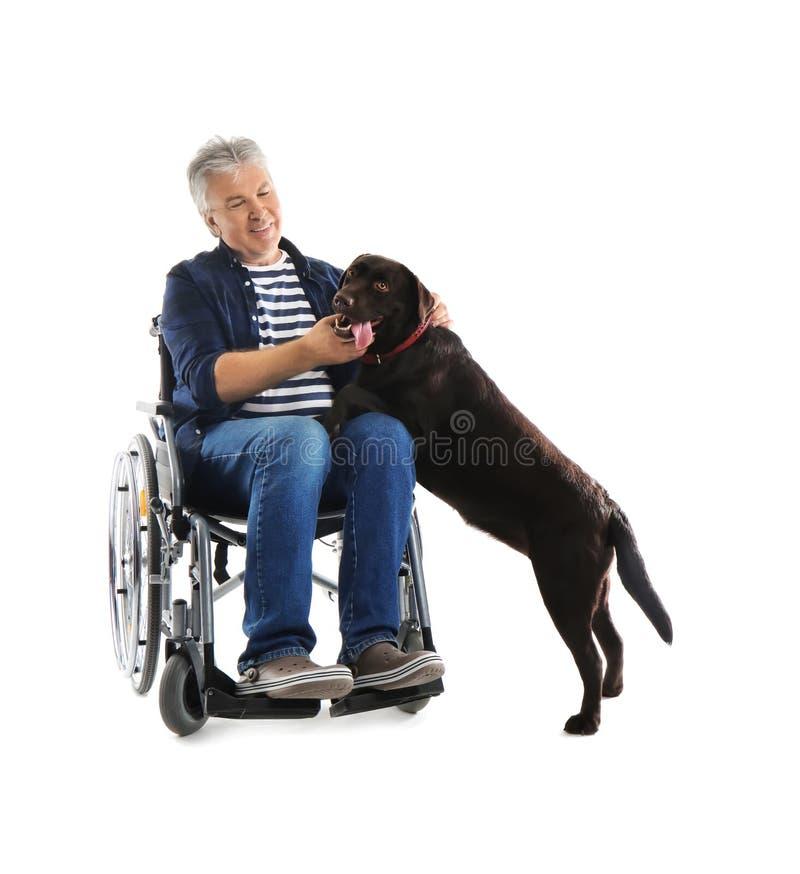 Hogere mens in rolstoel met zijn hond op witte achtergrond stock fotografie