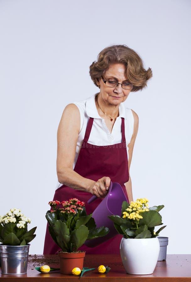 Hogere vrouw die bloemen plant stock fotografie